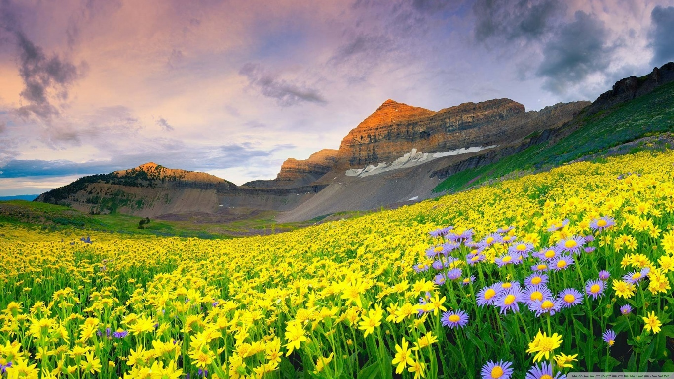 canyon_valley_flowers-wallpaper-1366x768