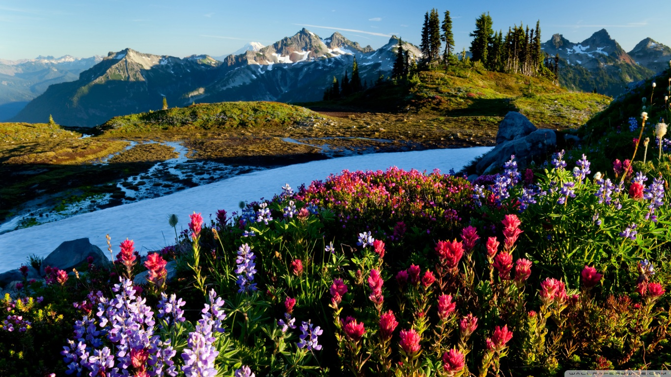 Mountain Flowers Wallpaper 1366x768 I Rimedi Italiani