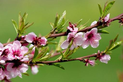 flower-1311844__340