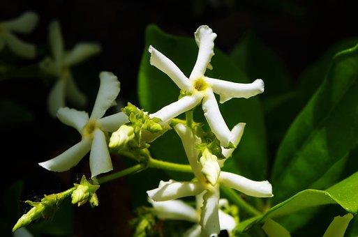 flower-3407161__340