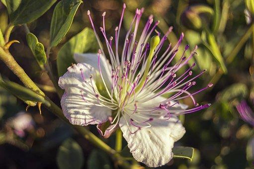 flower-3493484__340