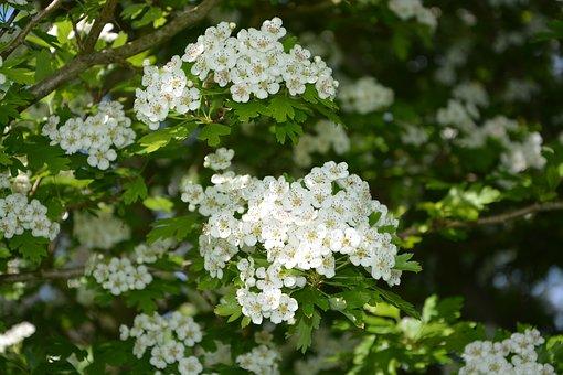 flowers-2243678__340